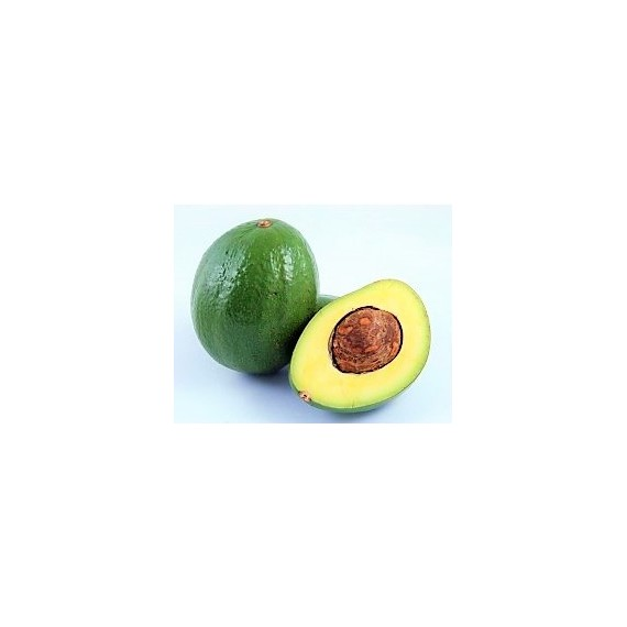 Avocat tropical République Dominicaine calibre 500-700g