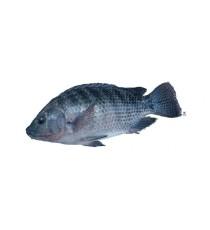 """Carton poisson tilapia écaillé vidé congelé """" taille L"""" NUMBER ONE 4kg"""