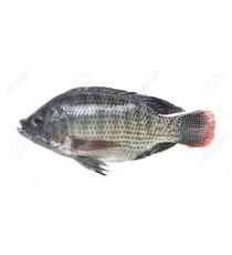 """Carton poisson tilapia écaillé vidé congelé """"taile M"""" NUMBER ONE 4kg"""